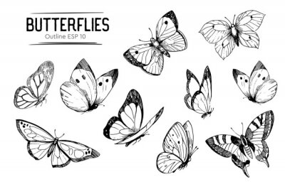 Naklejka Set of butterflies outlines. Hand drawn illustration converted to vector