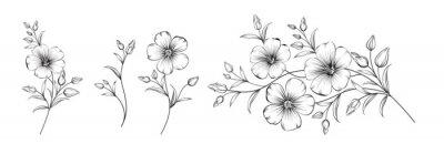 Naklejka Set of differents flower linen on white background.