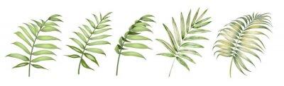 Naklejka Set of differents palm leaves on white background. Watercolor, line art, outline illustration.