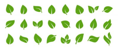 Naklejka Set of green leaf icons. Green color. Leafs green color icon logo. Leaves on white background. Ecology. Vector illustration.