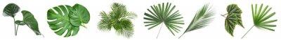 Naklejka Set of green tropical leaves on white background