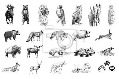 Naklejka Set of many animals and foot prints