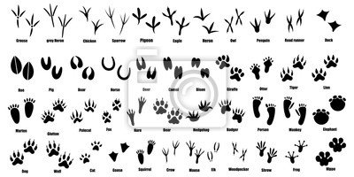 Naklejka Set of traces of animals and birds. Collection of silhouetted footprints of wild animals. Vector illustration for children. Black-white drawing of the trail from the paws of forest residents.