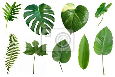 Naklejka Set of tropical green leaves isolated on white background.