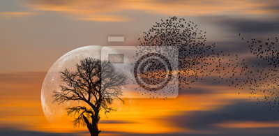 Naklejka Silhouette of birds with lone tree in the background big full moon at amazing sunset