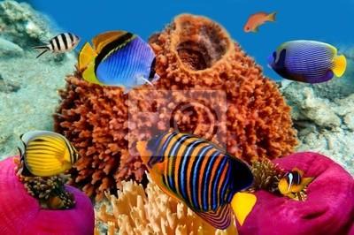 Naklejka Skalary Regal w Morzu Czerwonym, Egipt
