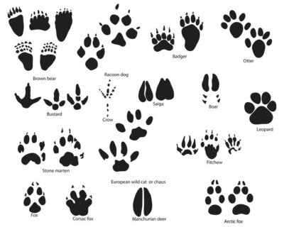 10 as well I0000Uso2cnECN3w moreover Horse Hoof Prints Border moreover 757871443513593466 moreover Bird footprint. on african footprint
