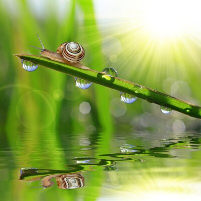 Naklejka Ślimak na zroszone trawy bliska
