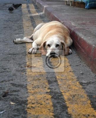 Słodki i smutny opuszczony pies patrząc na kamery