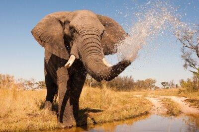 Naklejka Słoń
