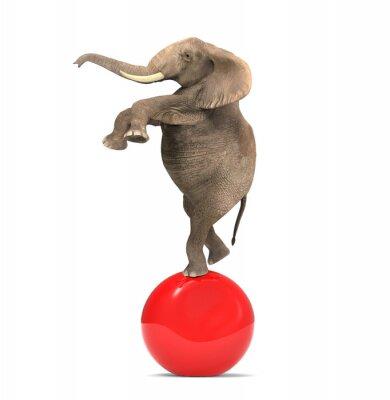 Naklejka Słoń balansowanie na dużą piłkę