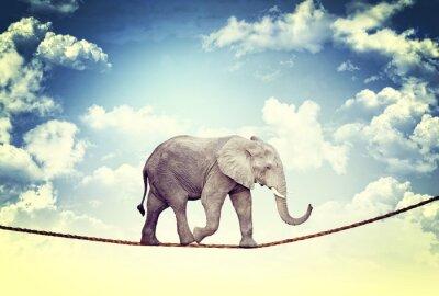 Naklejka Słoń na liny