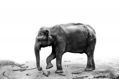 Naklejka Słoń Portret