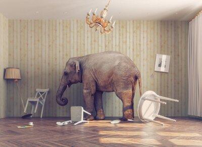Naklejka słoń w pokoju