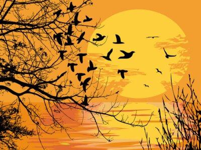 Naklejka słońca sceny