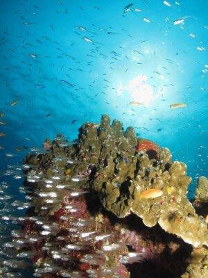 Naklejka Słoneczny rafa koralowa