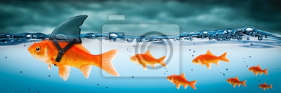 Naklejka Small Brave Goldfish With Shark Fin Costume Leading Others Through Stormy Seas - Leadership Concept