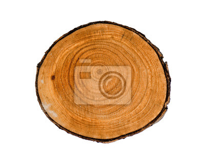 Naklejka Smooth wood slice cut from the woods. Neutral brown sustainable tree rings made of hardwood.