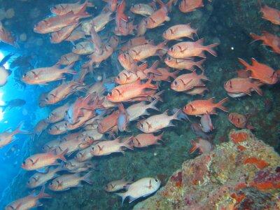 Naklejka Soldatenfische in einer Höhle dem Tauchplatz Shaab Marsa Alam