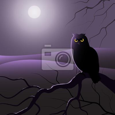 Sowa w nocy