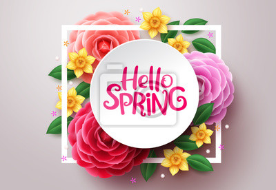 Naklejka Spring flower vector background. Hello spring text in white frame space and colorful camellia and crocus flowers in white background. Vector illustration.