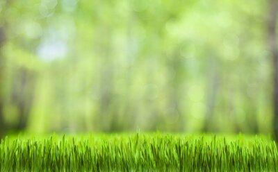 Naklejka spring green forest naturalne tło streszczenie