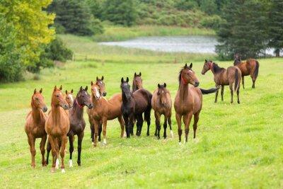 Naklejka Stado koni