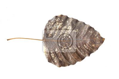 Naklejka Stary liści samodzielnie