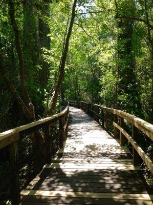 Naklejka Steg w Everglades den
