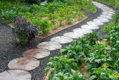 Naklejka Stone path winding in vegetable garden