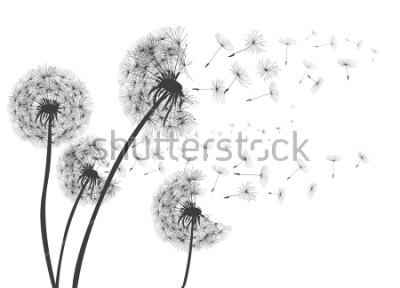 Naklejka Streszczenie Dandelions Dandelion z latającymi nasionami - na stanie