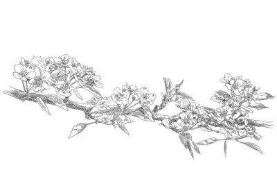 Naklejka Strony rysunku jabłoni kwiat kwiat