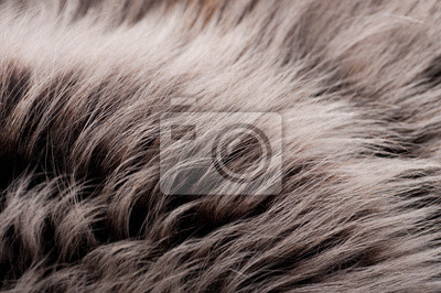 Struktura ze skóry wilka, srebrzyste futro