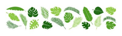 Naklejka Summer palm leaf vector green plant, exotic nature set isolated on white background. Jungle illustration