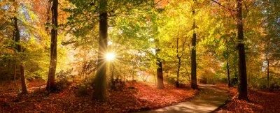 Naklejka Sunlit path in a park before sunset