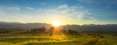 Naklejka  Sunset over vast blossoming meadow landscape
