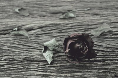 Naklejka Suszone róża na starym drewnianym tle, złamane serce koncepcji