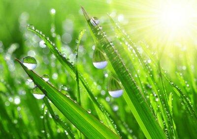 Naklejka Świeża trawa krople rosy z bliska