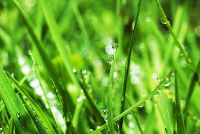 Naklejka Świeża zieleń trawy z kroplami wody