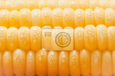 Naklejka Świeże kolby kukurydzy