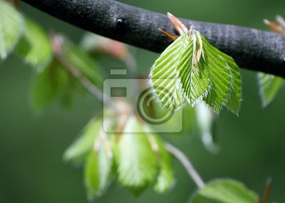 świeże liście w lesie