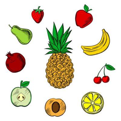 Naklejka Świeże owoce tropikalne i ogród szkice