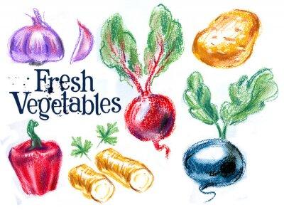 Naklejka świeże warzywa na białym tle. szkic, ilustracji