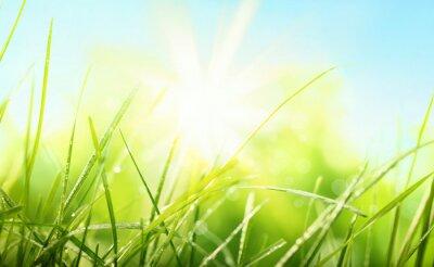 Naklejka Świeże zielona trawa i słońce