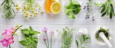 Naklejka Świeże zioła