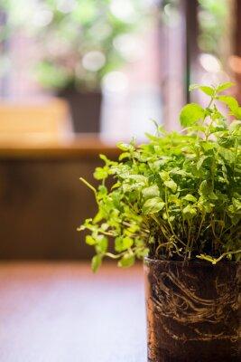 Naklejka Świeże zioła w doniczce