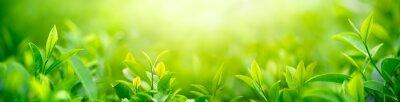 Naklejka Świeży pączek herbaty i liści