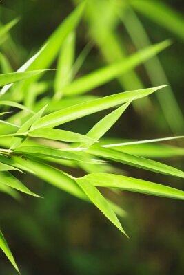 Naklejka Świeży zielony bambus w tle