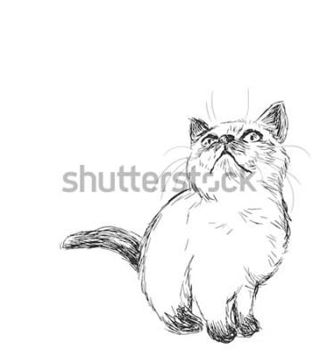 Naklejka Syjamski kot wektor szkic ilustracja karta na białym tle