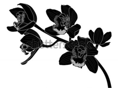 Naklejka Sylwetka kwiat orchidei